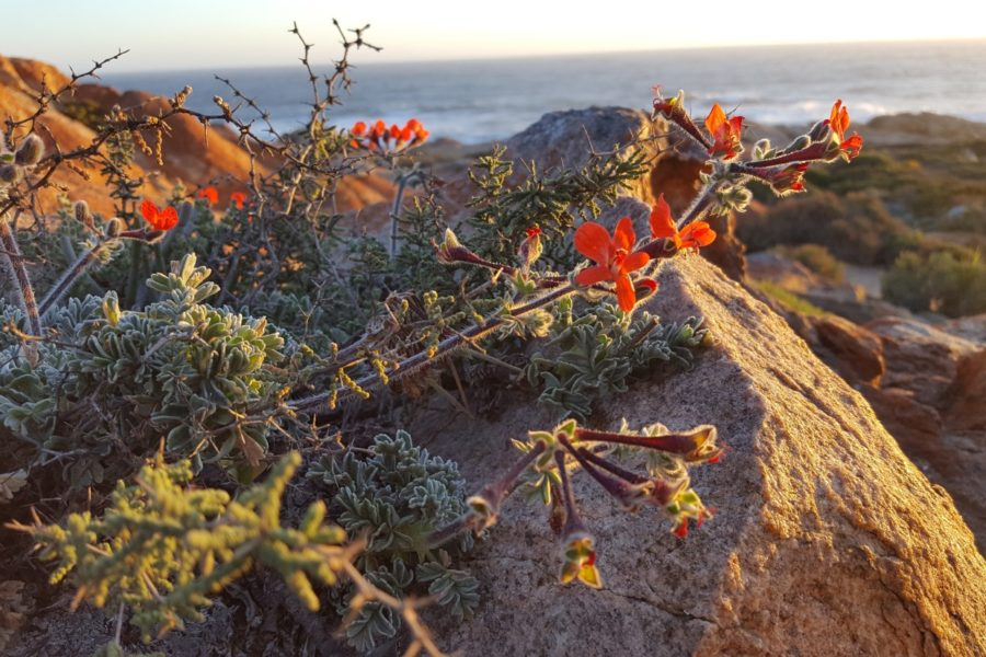 Namaqua National Park – Flower Camps